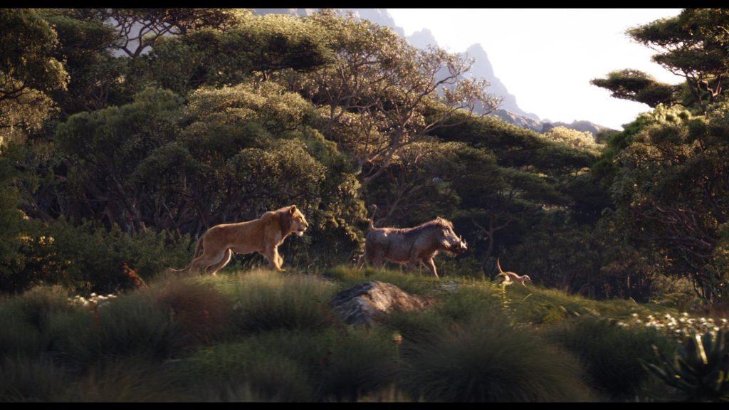thiên nhiên vua sư tử 02
