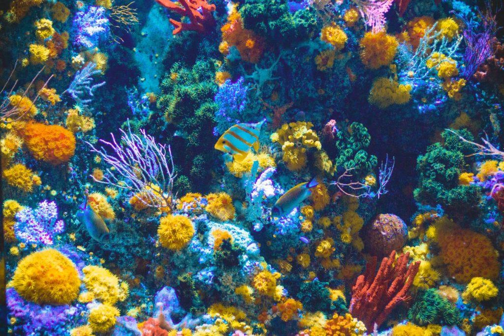Một số nghiên cứu khoa học đã cho thấy kem chống nắng hóa học có thể gây hại tới sinh vật biển nói chung và nhất là rạn san hô nói riêng. Ảnh: Unsplash.