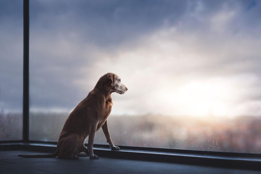 hạng mục đặc biệt cho chú chó già