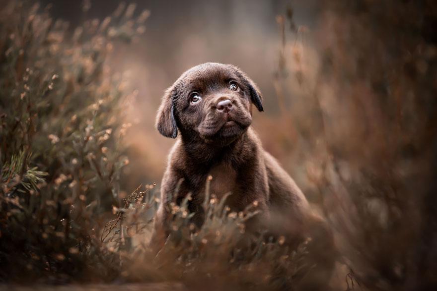 giải nhì hạng mục chó con