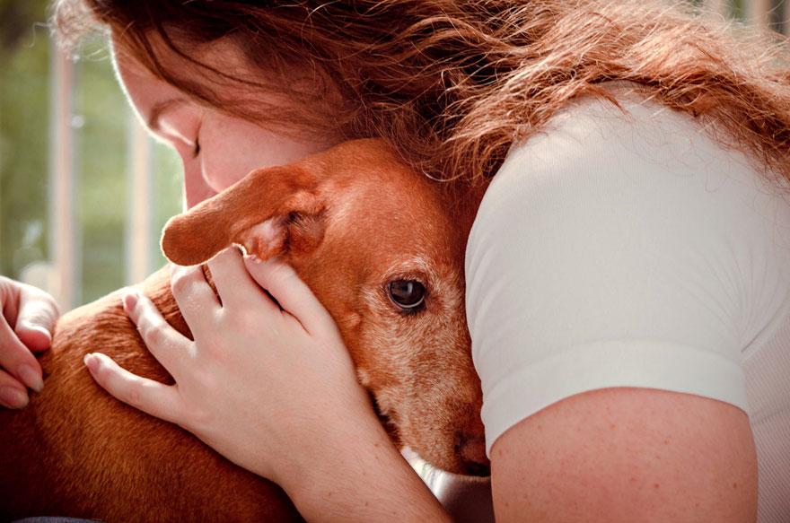 giải ba hạng mục chú chó được cứu trợ