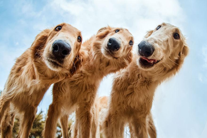 giải nhì hạng mục chó được cứu trợ