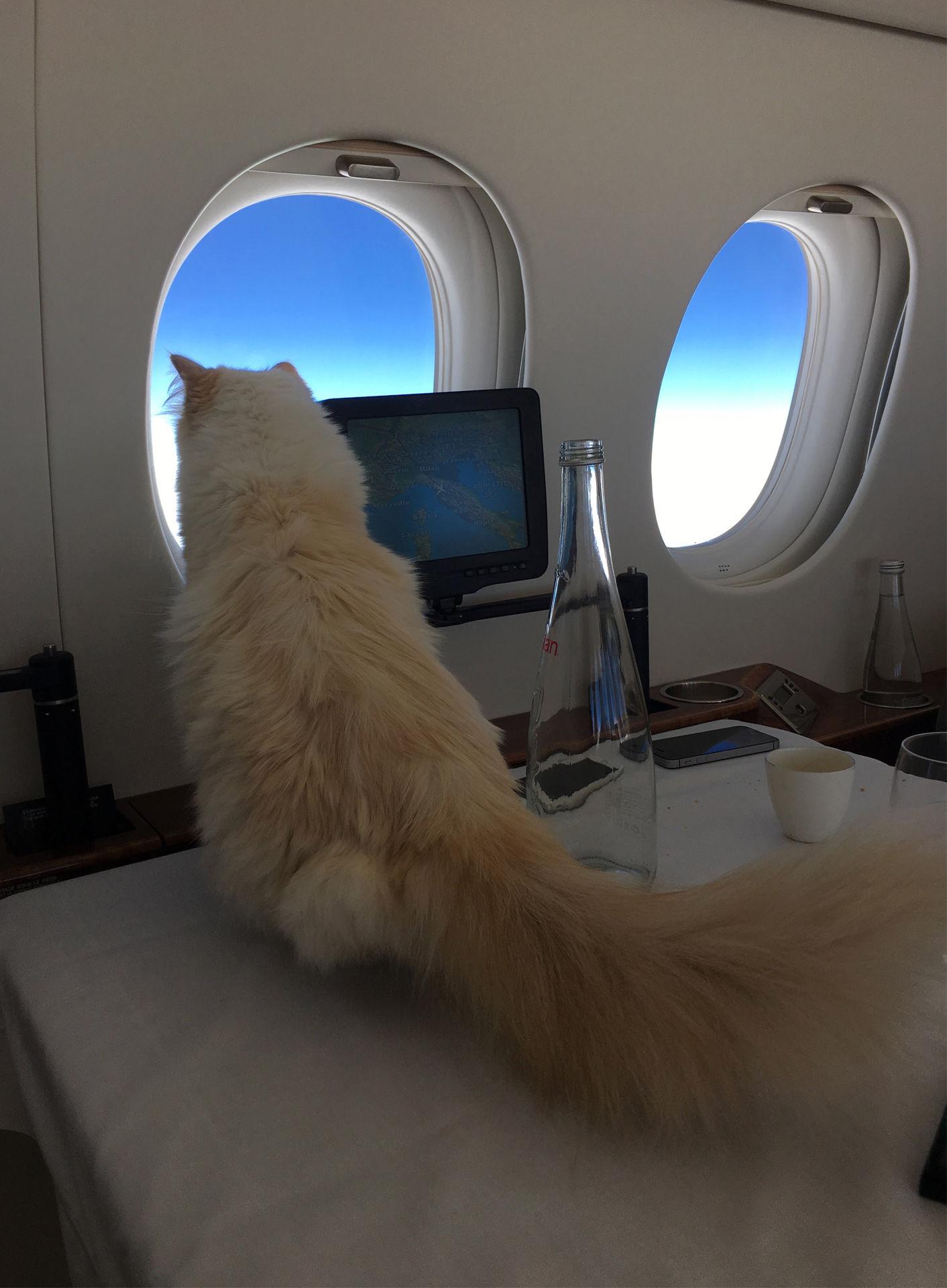 mèo sành điệu nhất Instagram - mèo choupette bay cùng karl lagerfeld