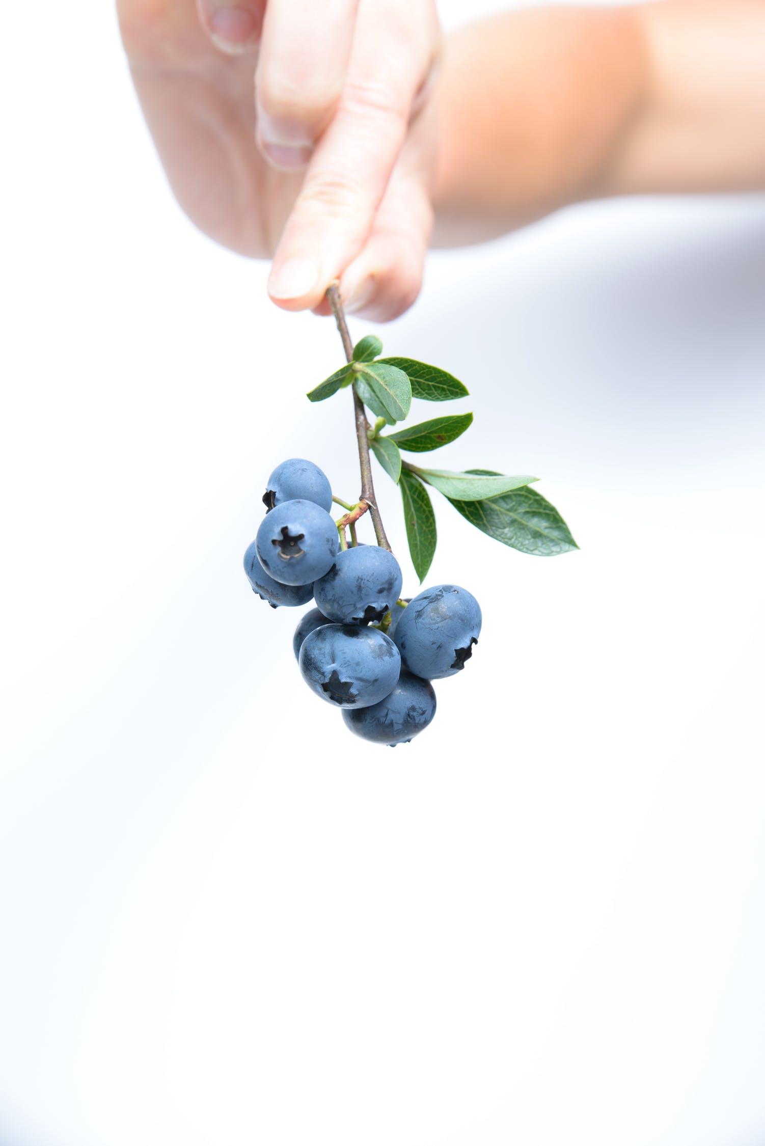 bàn tay cầm chùm blueberry