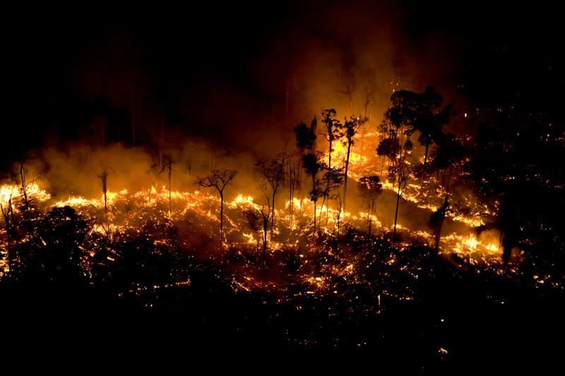 cháy rừng amzon