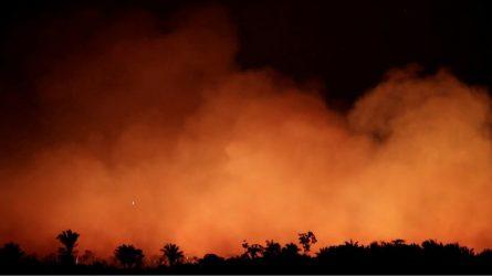 Cháy rừng Amazon khiến động vật hoang dã tại đây phải hứng chịu những gì?