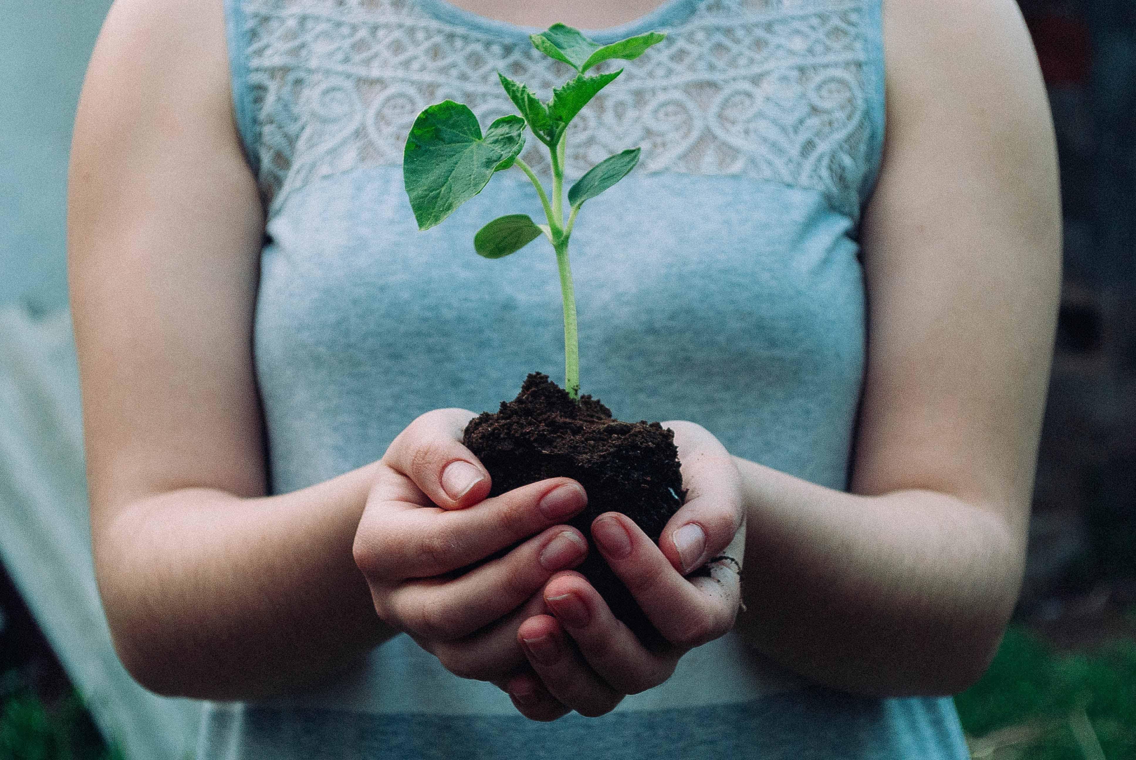 chung tay trồng rừng