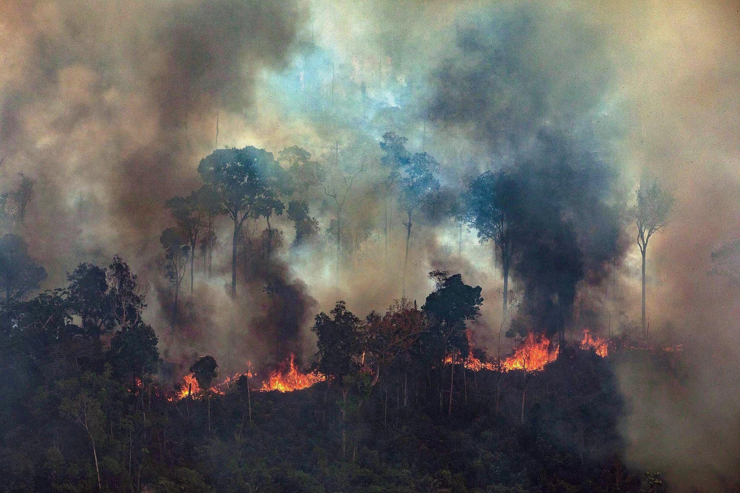 rừng Amazon cháy