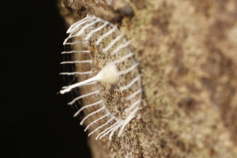 cấu trúc tơ nhện