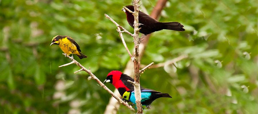 chim ở amazon