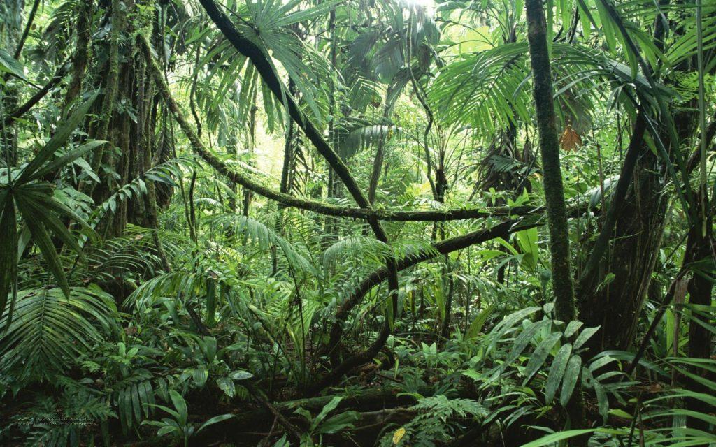 rừng amazon xanh tươi