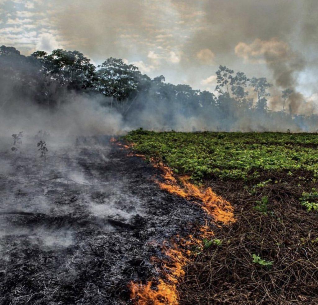vụ cháy rừng amazon