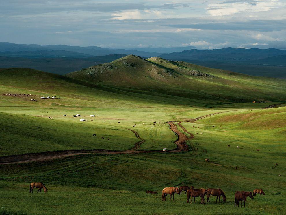 ngựa ở đồng cỏ hulunbuir