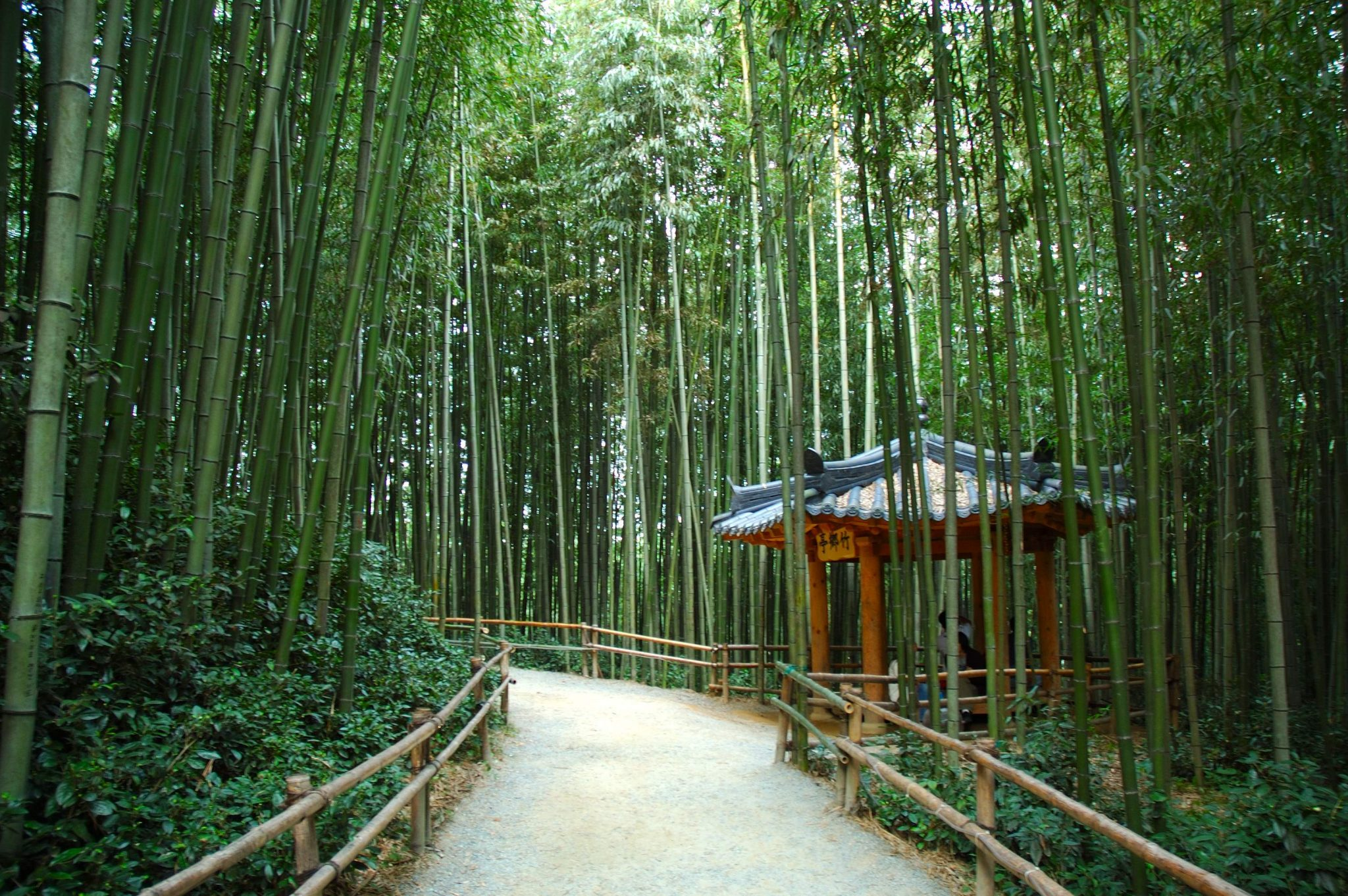 rừng tre damyang