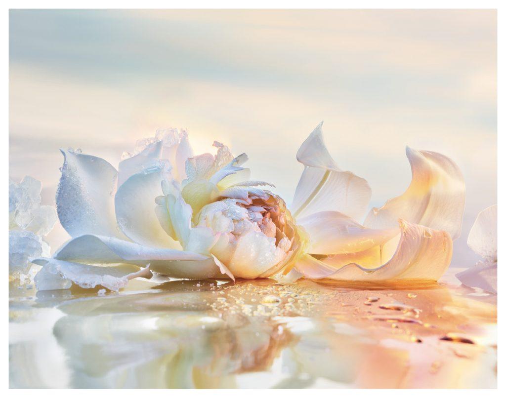 Joy by Dior mùi hương của sự tinh tế