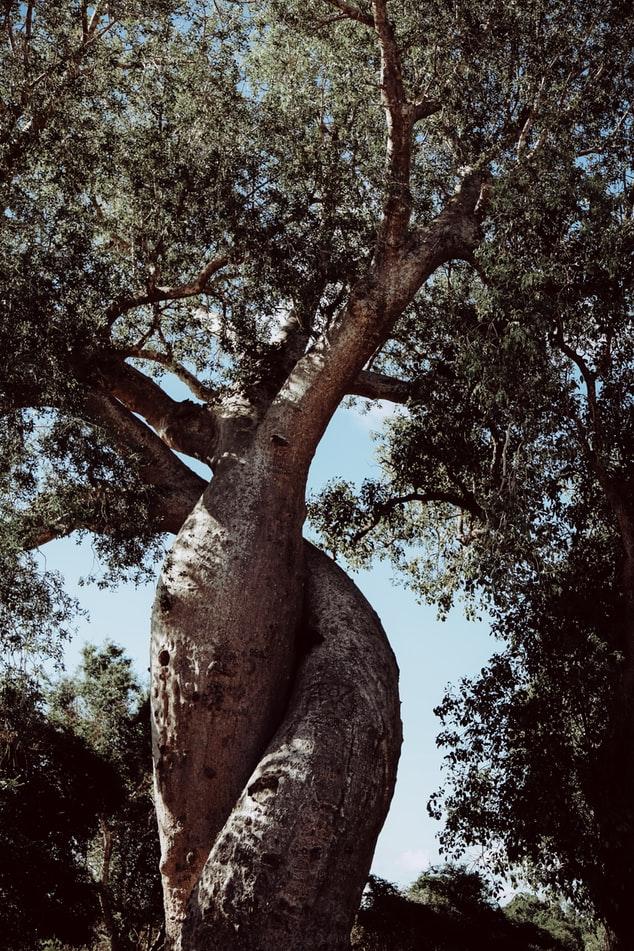 da mặt căng bóng từ dầu baobab