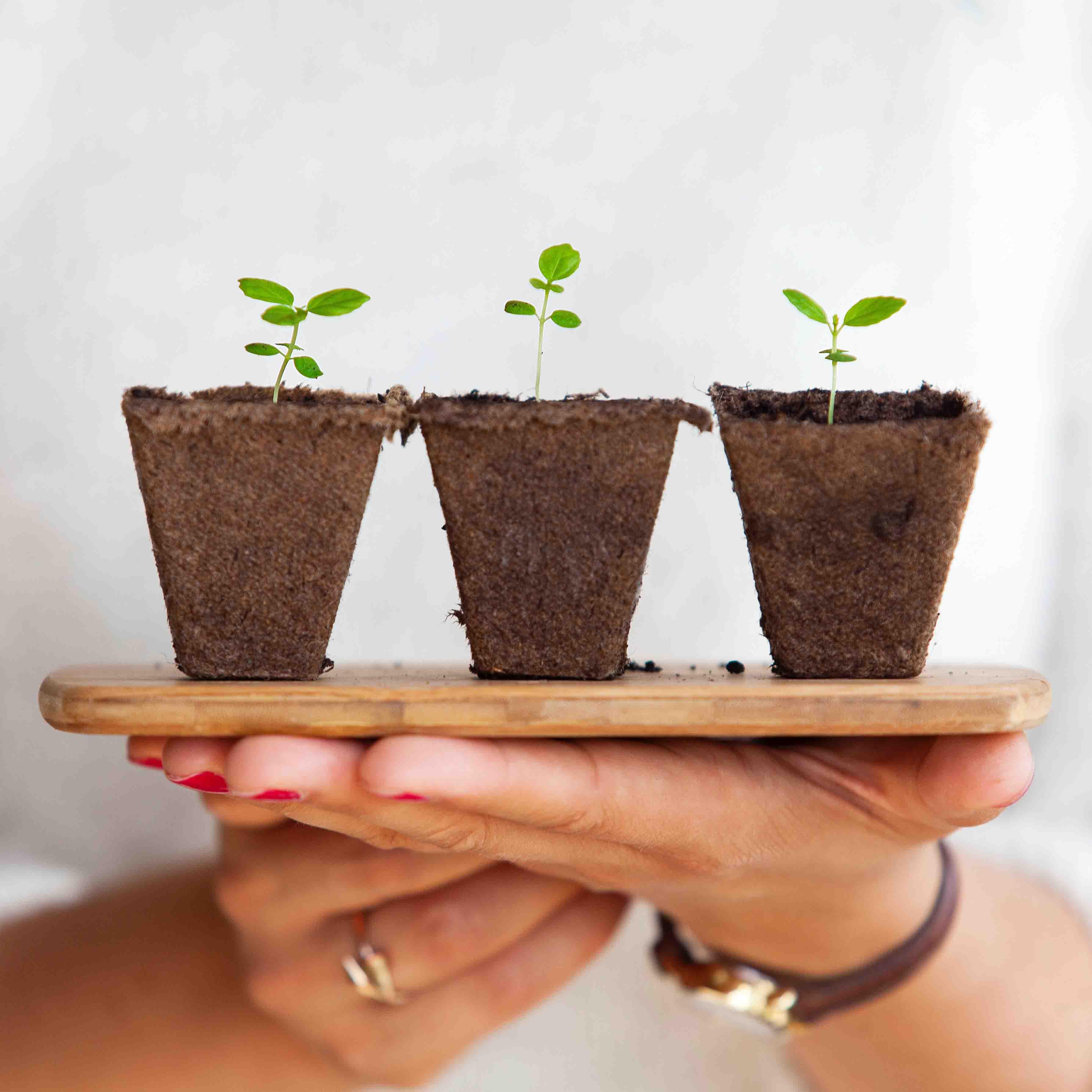 trồng cây bảo vệ môi trường