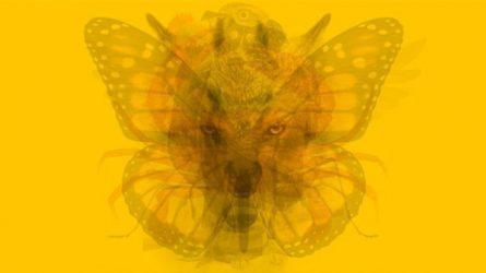 Trắc nghiệm tính cách qua hình ảnh con vật bạn nhìn thấy đầu tiên