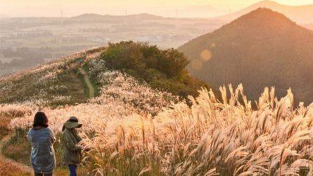 Mùa Thu Hàn Quốc - Lãng du một nét phiêu bồng