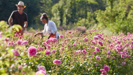 Ghé thăm Grasse – Vương quốc nước hoa