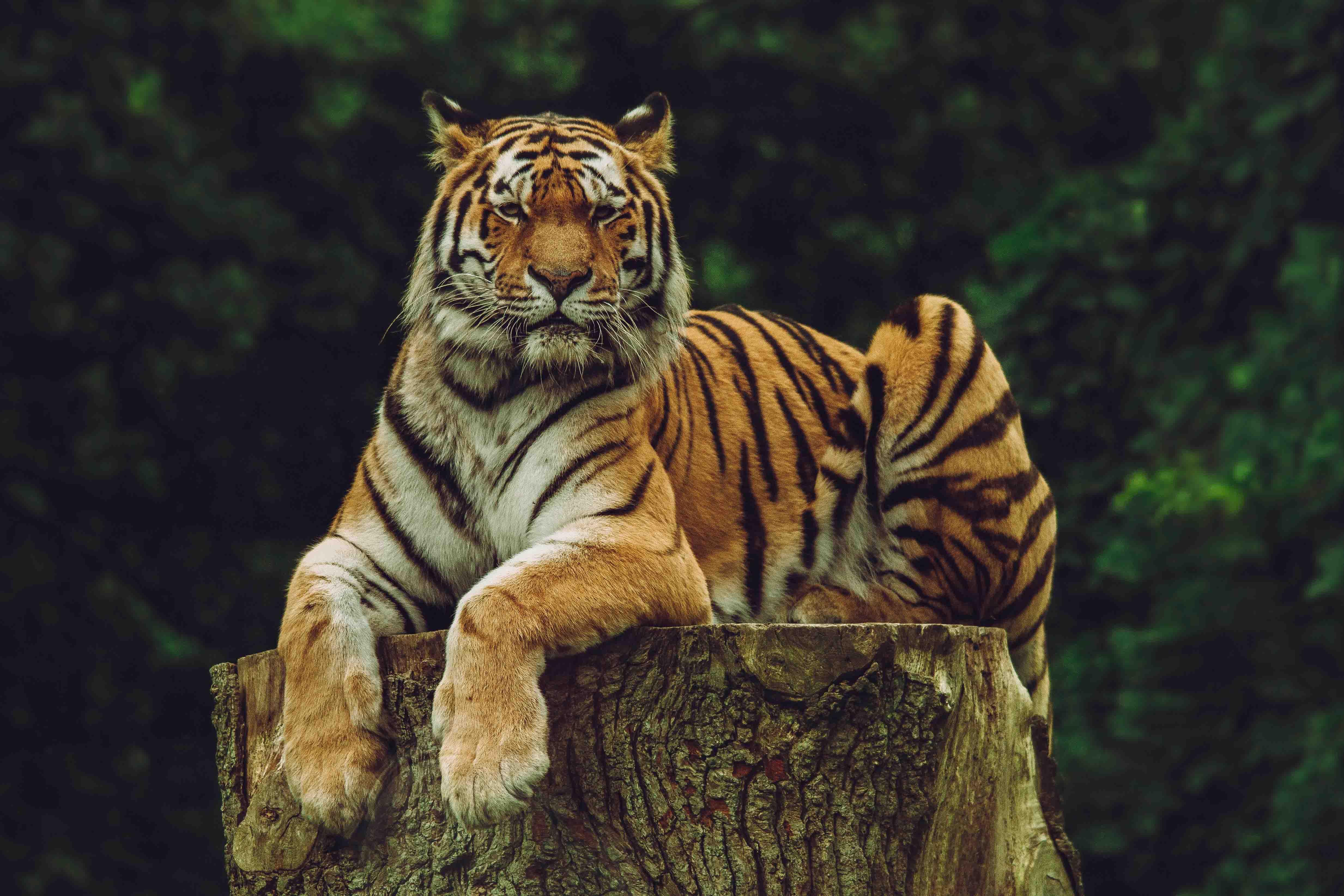 ảnh động vật hoang dã