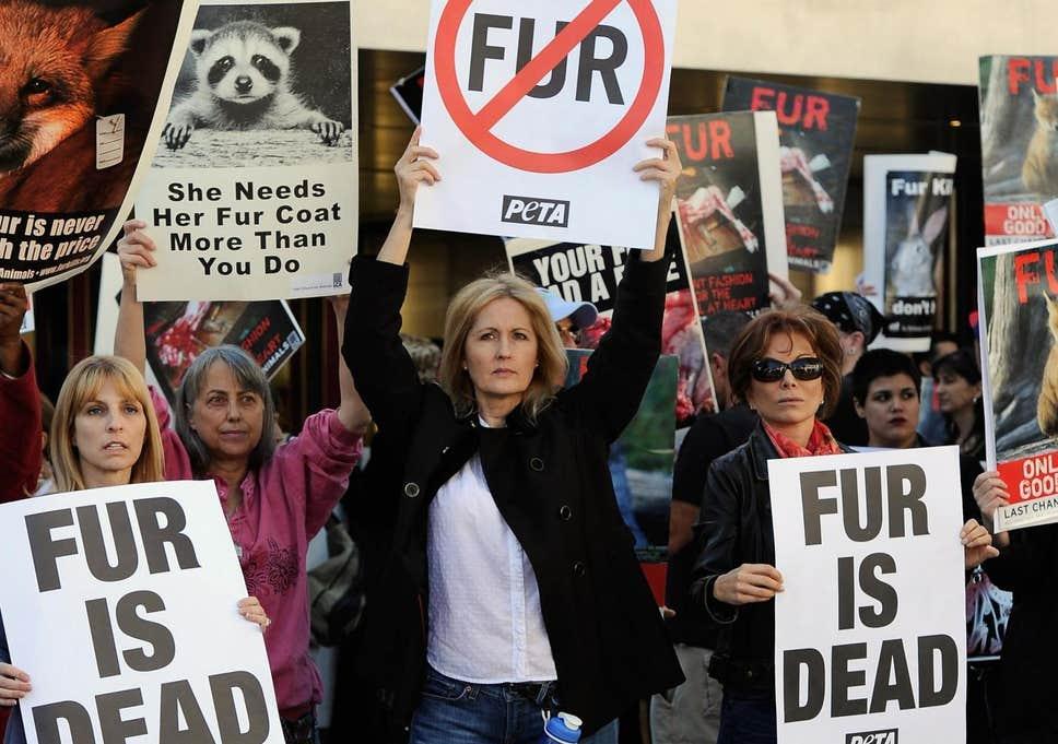 California cấm kinh doanh sản phẩm lông thú