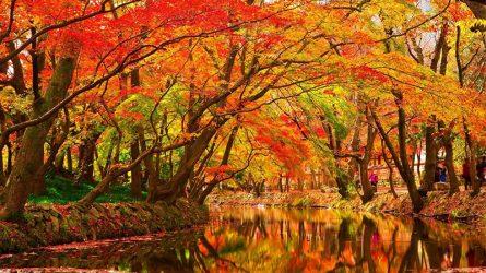 Du lịch Đài Loan ngắm lá phong mùa Thu