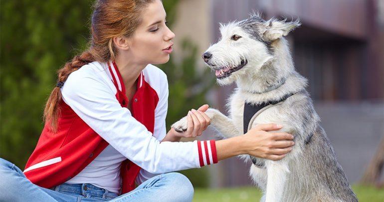 cô gái nói chuyện với pet