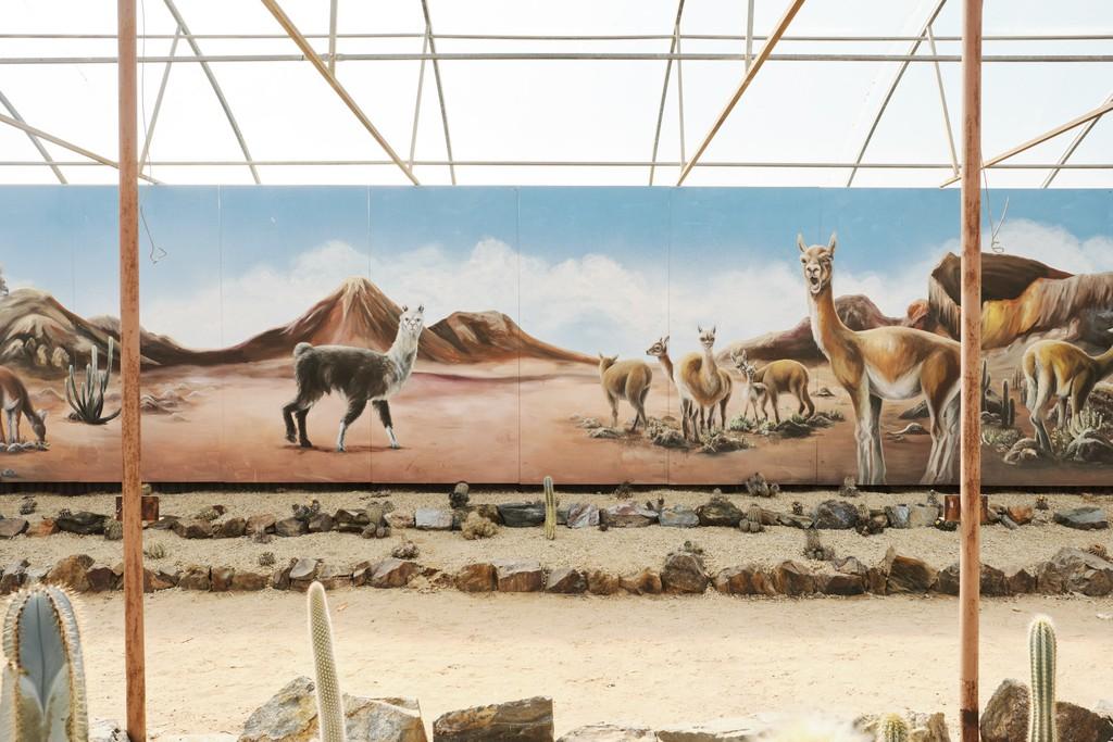 hình ảnh sa mạc khu vườn catus country