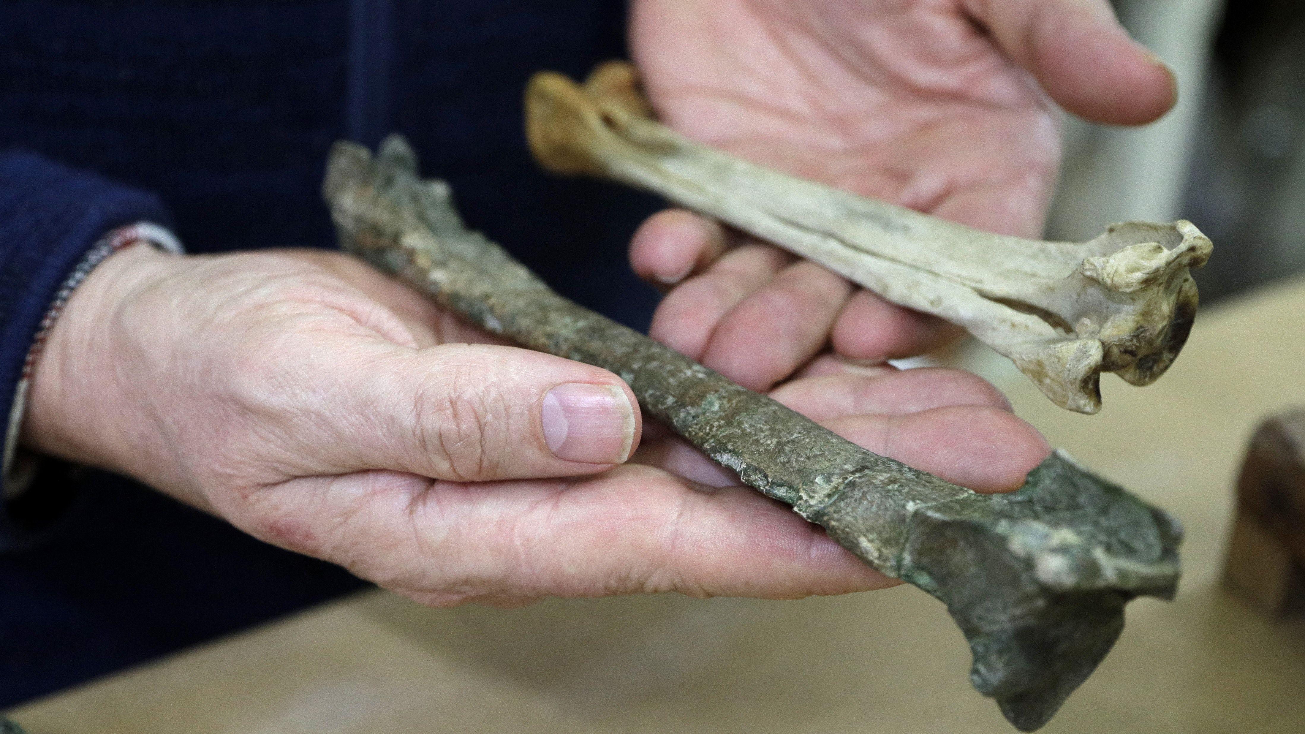 mẫu hóa thạch chim cánh cụt cổ đại