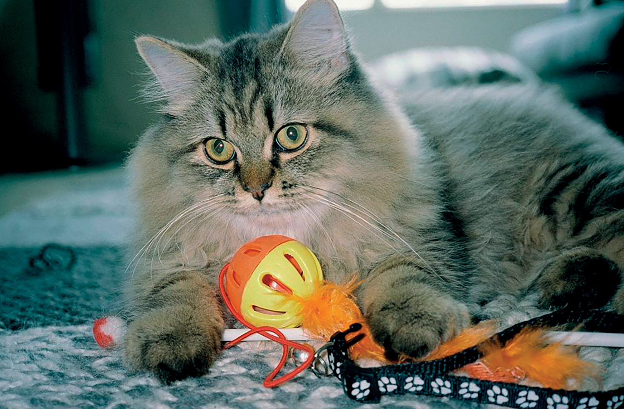 quà Giáng Sinh mèo của Salim