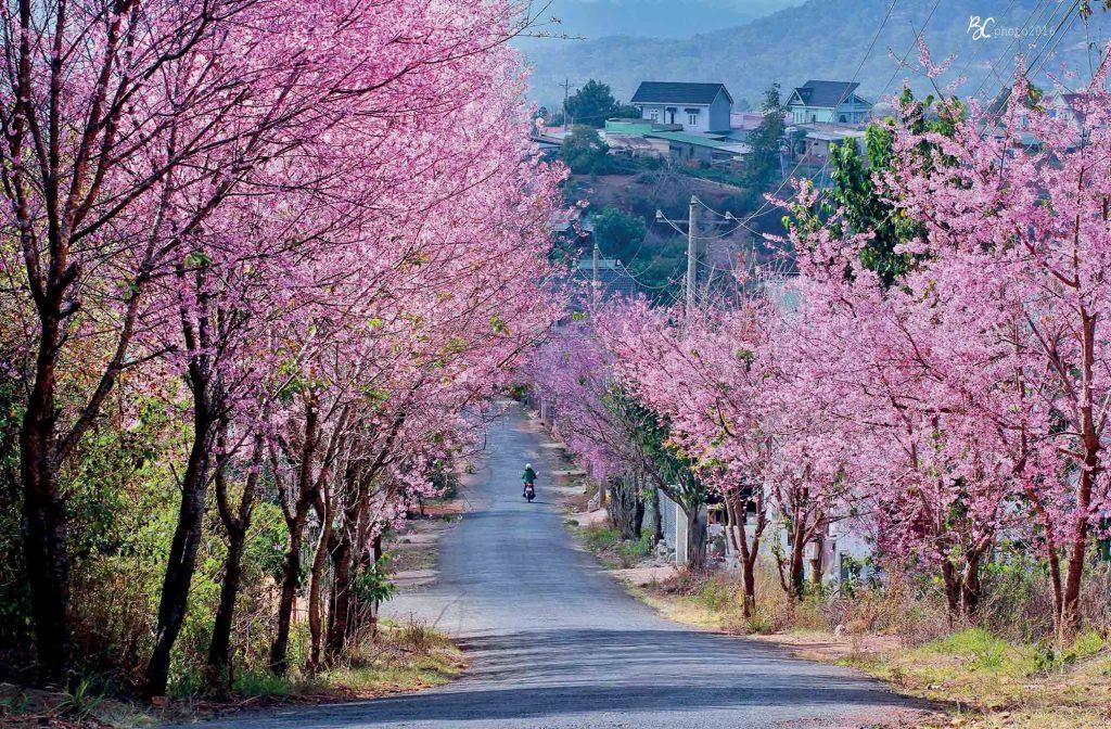địa điểm con đường hoa đào