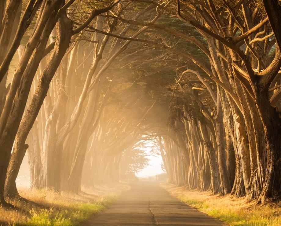 hàng cây mờ ảo dưới làn sương sớm