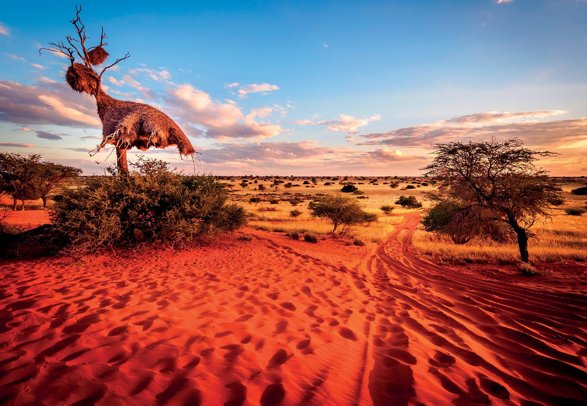địa điểm sa mạc Kalahari