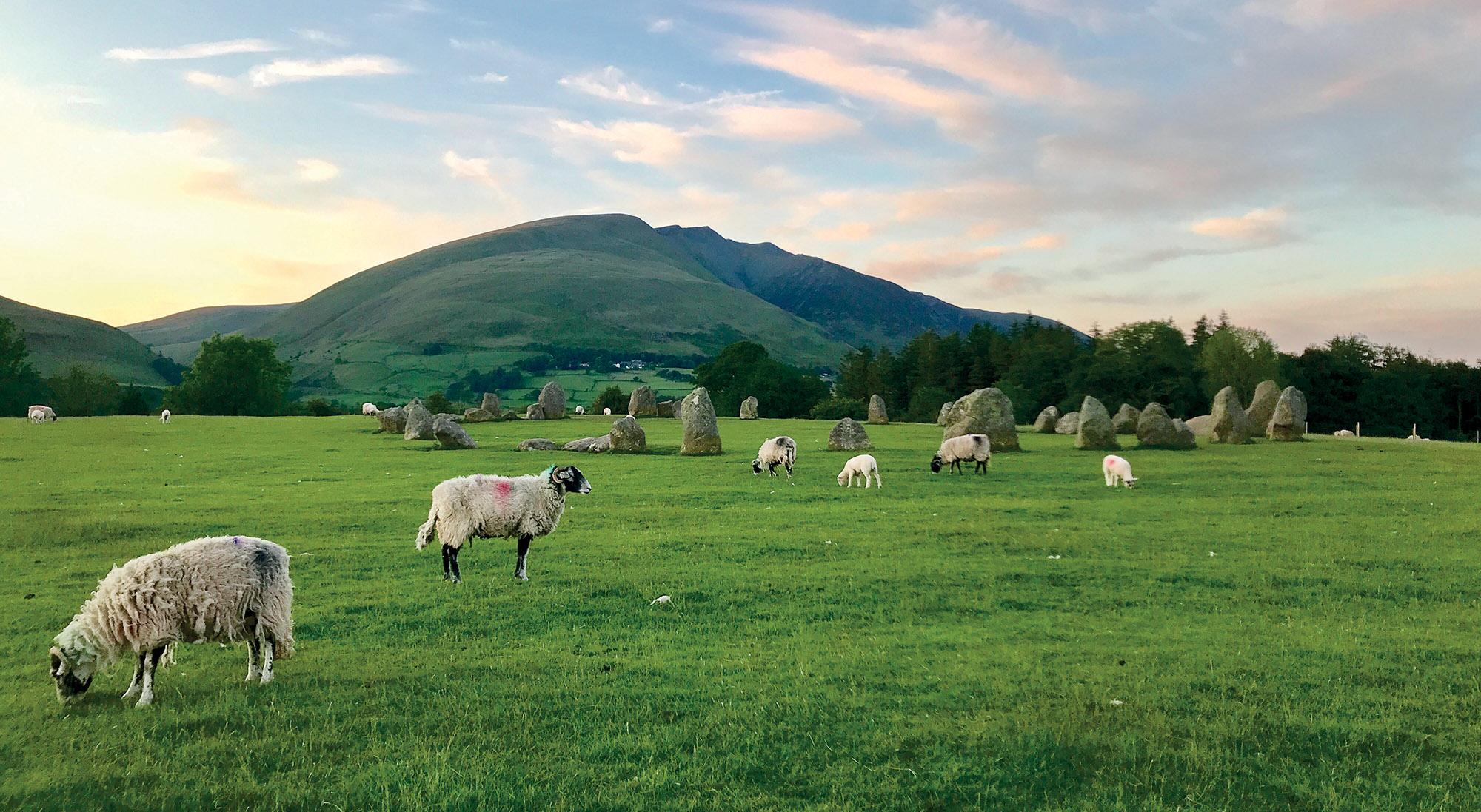 địa điểm thảo nguyên xanh và đàn cừu