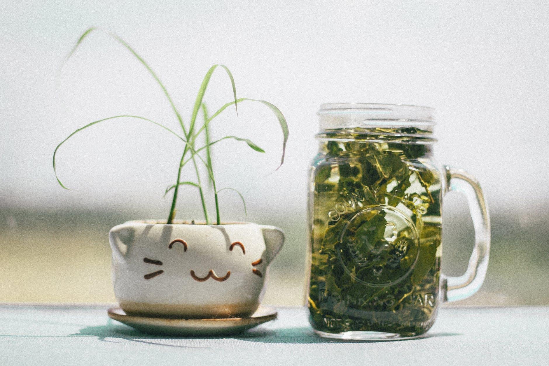 Trà thảo mộc-Ly trà xanh đặt kế bình hoa con mèo.