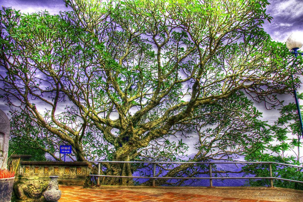 cây xanh ở yên tử