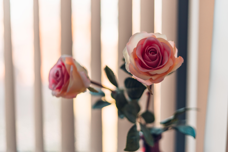 ý nghĩa của màu hồng nhạt
