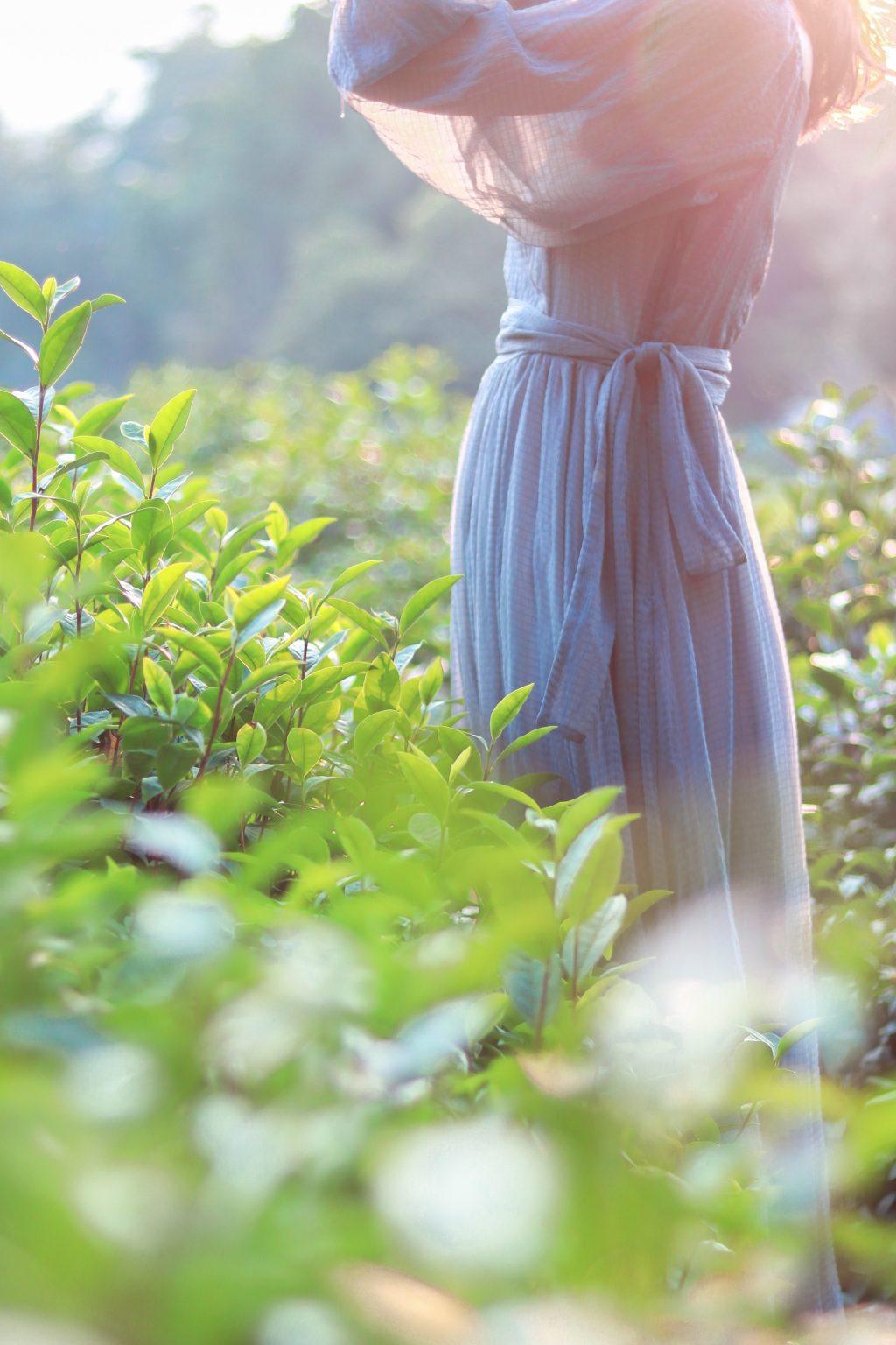 cô gái đi bộ trong vườn trà