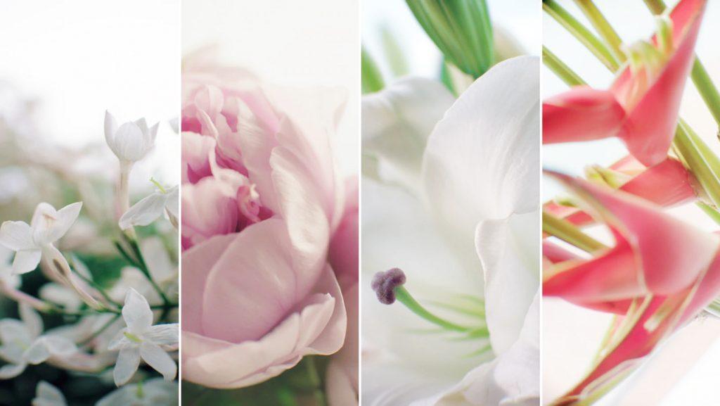 Hoa nhài, hoa mẫu đơn, hoa lily trắng và hoa longoza là bốn loài hoa tạo nên phần hồn của dòng Dior Capture Totale Cell Energy.