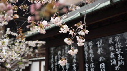 Ichigo Ichie - Triết lý sống hạnh phúc của người Nhật