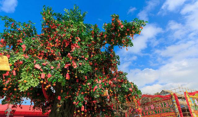 cây nguyện ước du lịch Hồng Kông