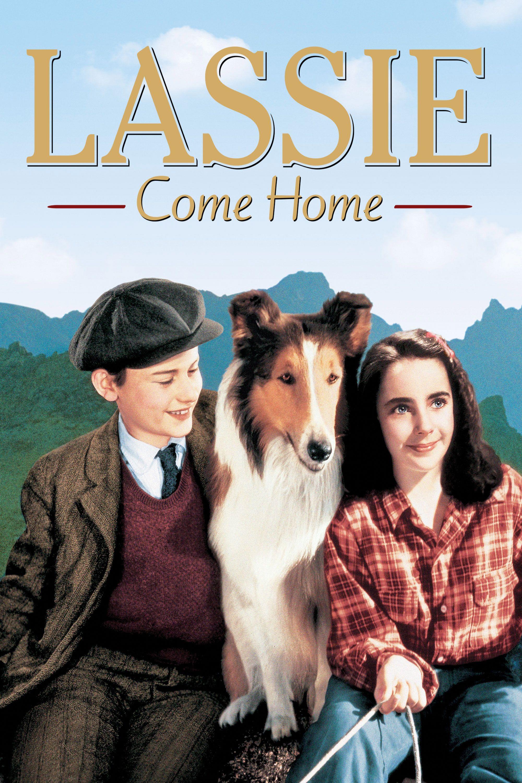 Phim hay Lassie về nhà