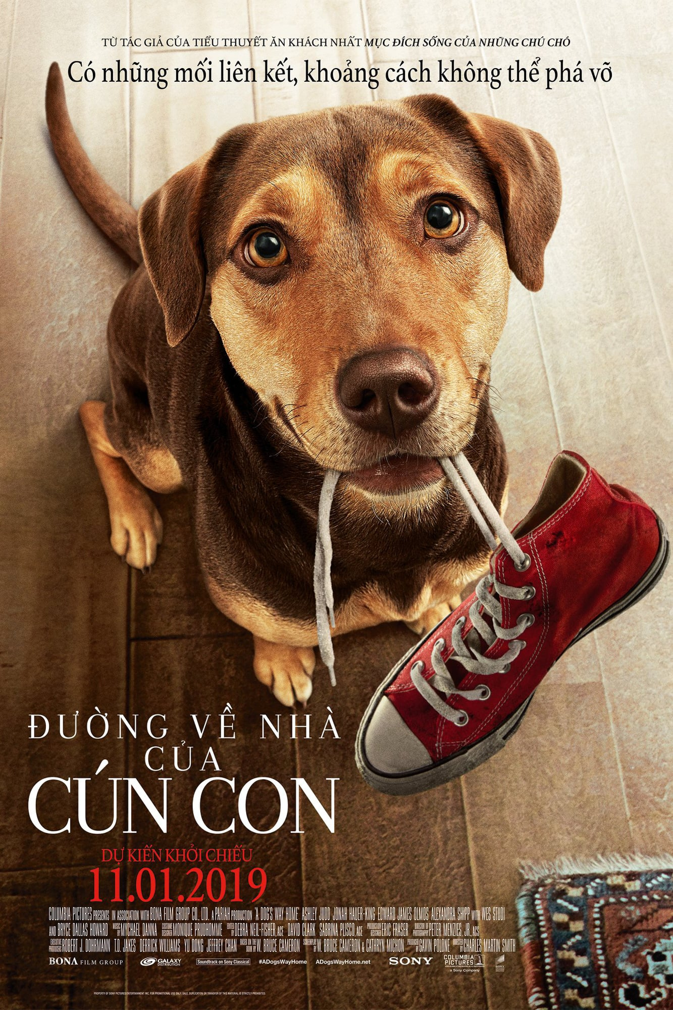 Phim hay Đường về nhà của một chú chó