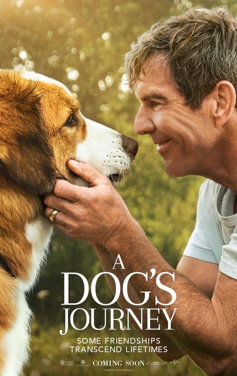 Phim hay Hành trình của chú chó Bailey