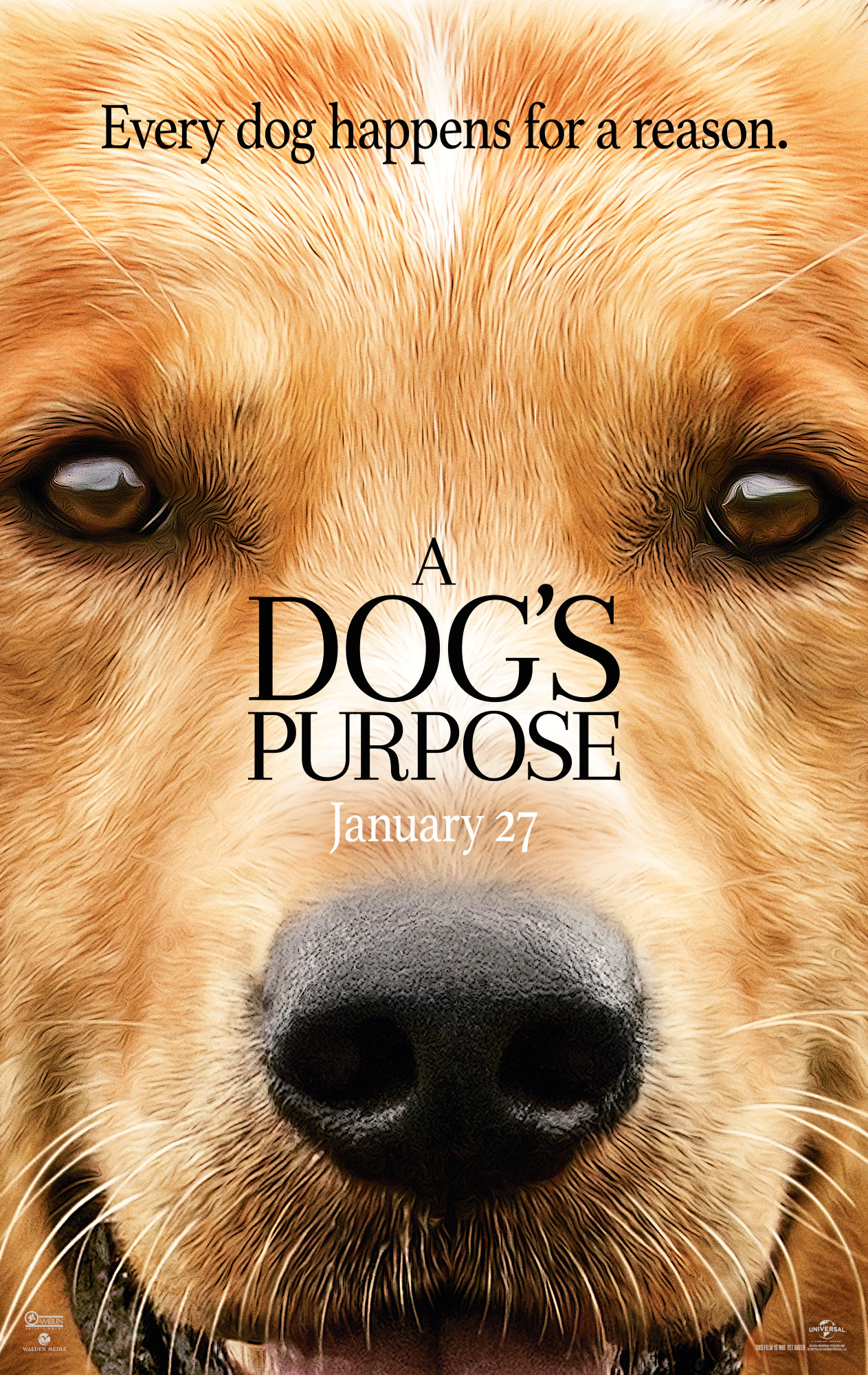 phim mục đích của chú chó