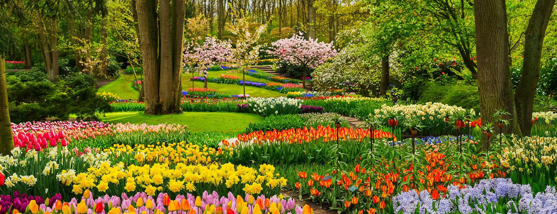 du lịch Hà Lan hoa tulip