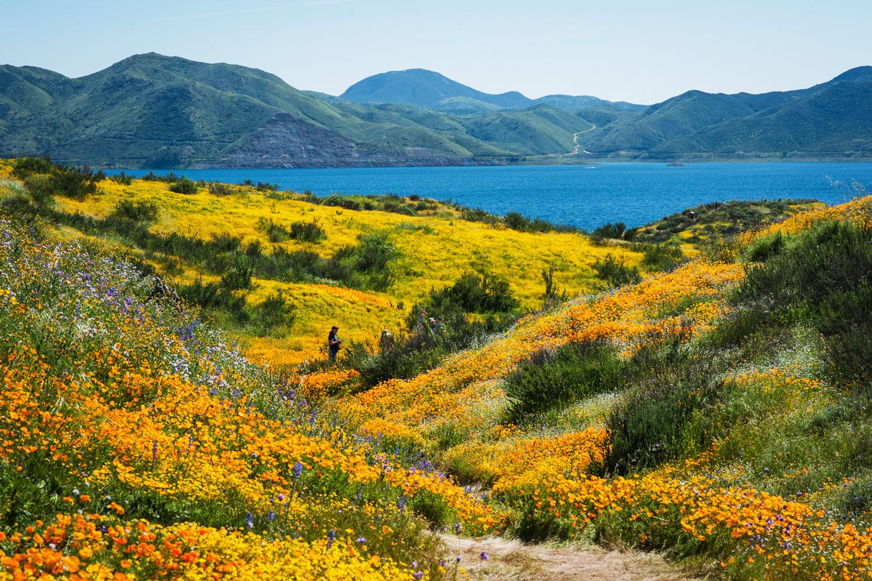 du lịch siêu nở hoa California