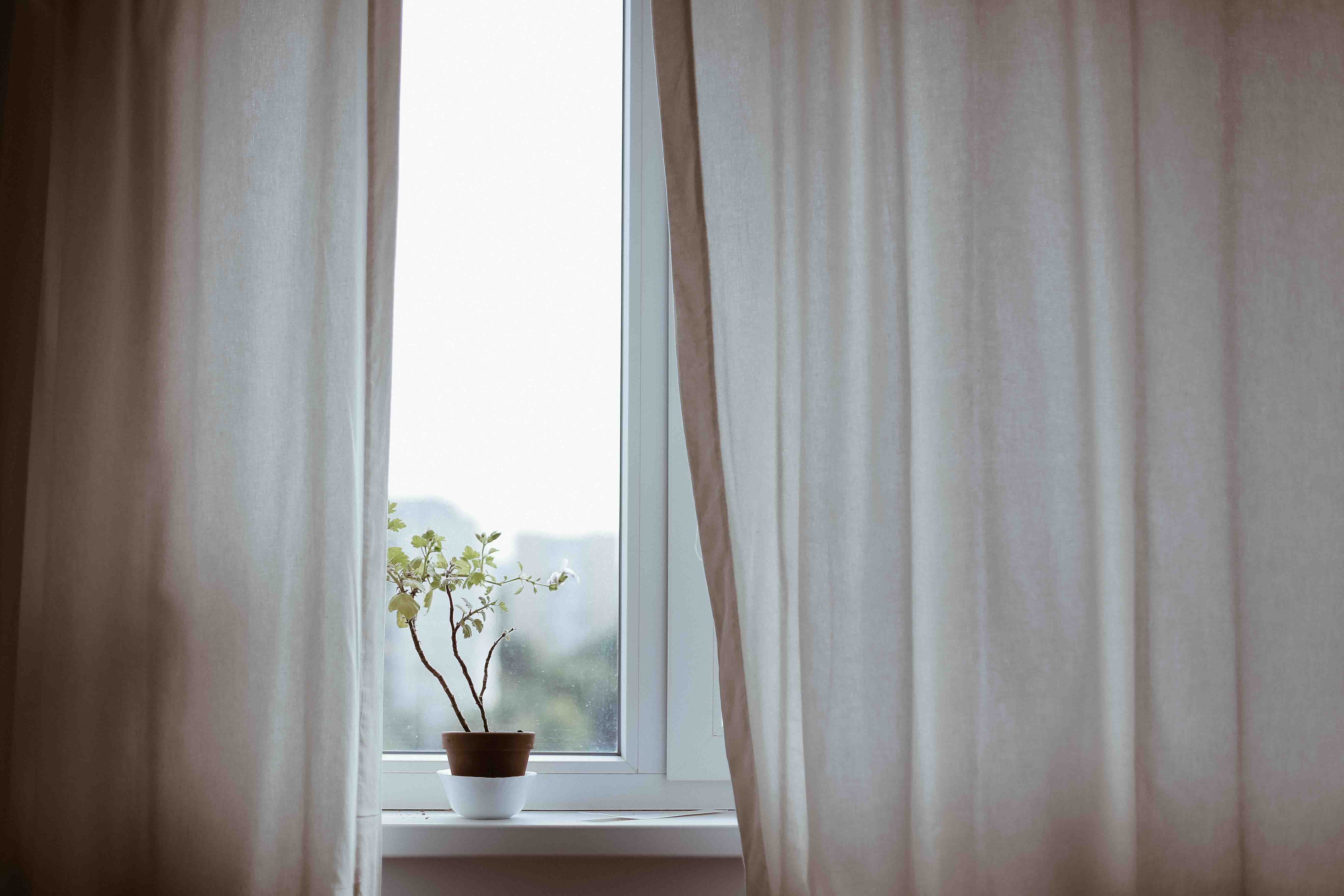 chậu cây bên khung cửa sổ