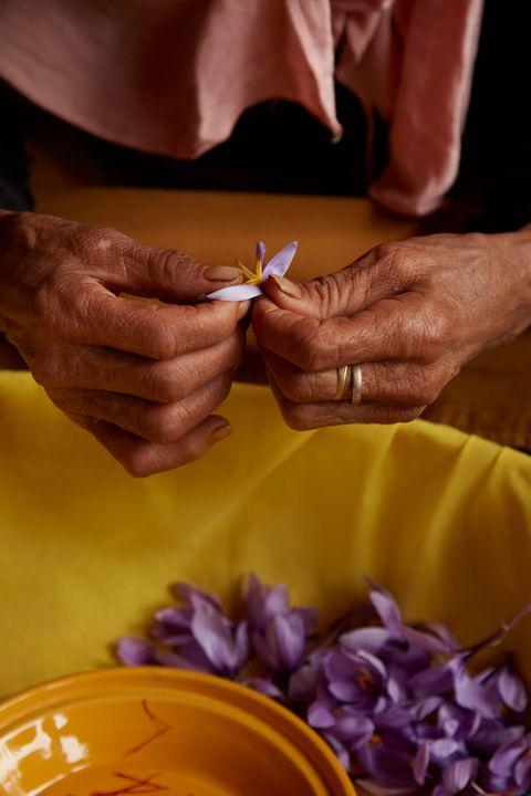 Yves Saint Laurent-Bàn tay cầm hoa.